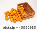 オレンジ オレンジ色 橙の写真 45990935