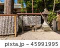 おみくじ 神社参拝 45991995