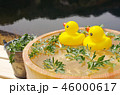 アヒルの入浴 46000617