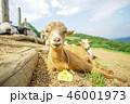 牧場のヤギ 46001973