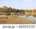 公園 舎人公園 メタセコイアの写真 46003335