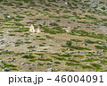 City of the dead. Ancient cemetery. 46004091