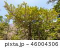 木 樹木 植物の写真 46004306