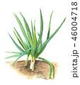 野菜 白バック ねぎのイラスト 46004718