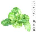 チンゲン菜 46005992