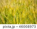 麦 畑 農業の写真 46008973