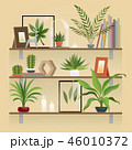 棚 シェルフ 鑑賞植物のイラスト 46010372
