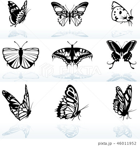 Black and White Butterflies 46011952