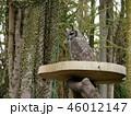 伊豆シャボテン動物公園 46012147