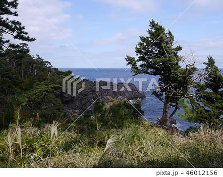 城ヶ崎海岸(伊豆半島ジオパーク) 46012156