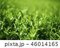 茶葉 茶畑 畑の写真 46014165