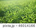 茶葉 茶畑 畑の写真 46014166