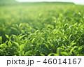 茶葉 茶畑 畑の写真 46014167