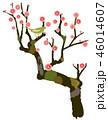 梅 梅の木 紅梅のイラスト 46014607