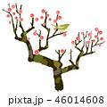 梅 梅の木 紅梅のイラスト 46014608