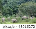 動物 ぞう ゾウの写真 46016272