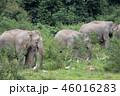 動物 ぞう ゾウの写真 46016283
