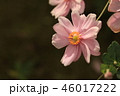 花 46017222
