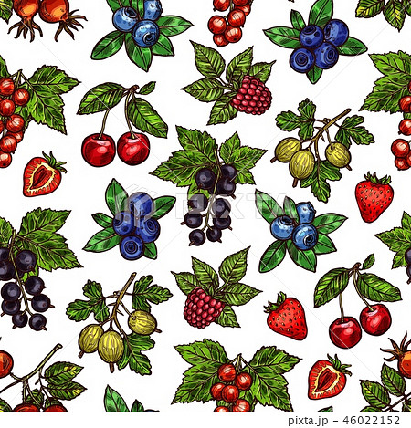 Seamless pattern of berries with leaves sketches 46022152