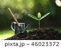 植物 双葉 芽生えの写真 46023372