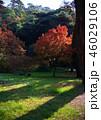 紅葉イメージ 逆光 perming 写真素材 46029106