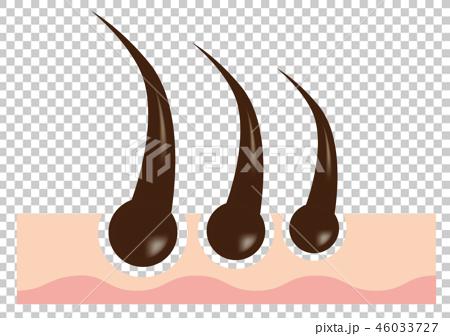 Cross section B of hair root (like logo) 46033727