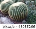丸いサボテン 46035266