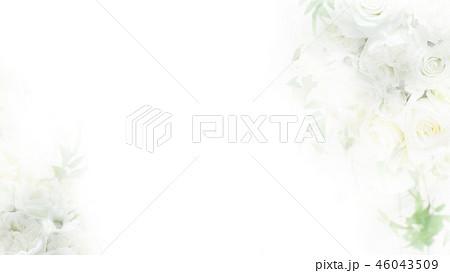 背景-バラ-ホワイト 46043509
