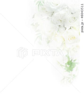 背景-バラ-ホワイト 46043511