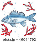 Sea Bass. Vector illustration with refined details and optimized stroke that allows the image to be 46044792