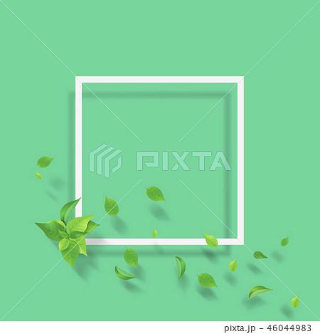 新緑 葉 白いフレーム グリーン 46044983