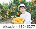 みかん収穫 シニア女性 帽子 横位置 右側 46046277