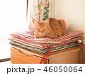 窓際の座布団にのった茶トラ猫のムギ 46050064
