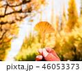 銀杏 公孫樹 イチョウの写真 46053373