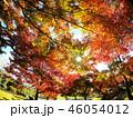 里山の紅葉 46054012