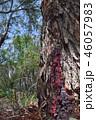 樹液 46057983