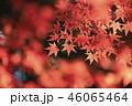紅葉 秋 葉の写真 46065464