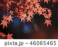 紅葉 秋 葉の写真 46065465