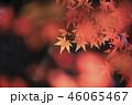 紅葉 秋 葉の写真 46065467