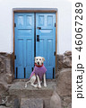 Dog against blue door 46067289