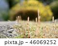 自然 春 植物の写真 46069252