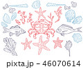 Set sea animals. Shell, cuttlefish, coral, oyster, crab, shrimp, seaweed, star, fish and octopus 46070614