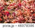 秋 紅葉 落ち葉の写真 46078386