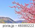 満開 桜 春の写真 46080222