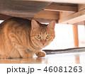 ソファーの下に隠れた茶トラ猫のムギ 46081263