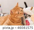 台所のカゴに顔をスリスリする茶トラ猫のムギ 46081575