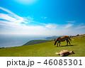 隠岐の島 夏 西ノ島町の写真 46085301
