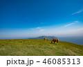 隠岐の島 夏 西ノ島町の写真 46085313