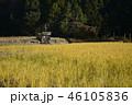 農作物 米 日本の写真 46105836