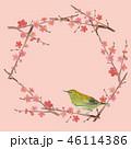 梅 紅梅 春のイラスト 46114386
